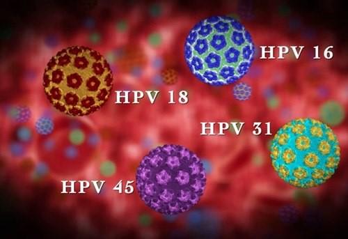 virus-hpv-lay-nhiem-benh-sui-mao-ga